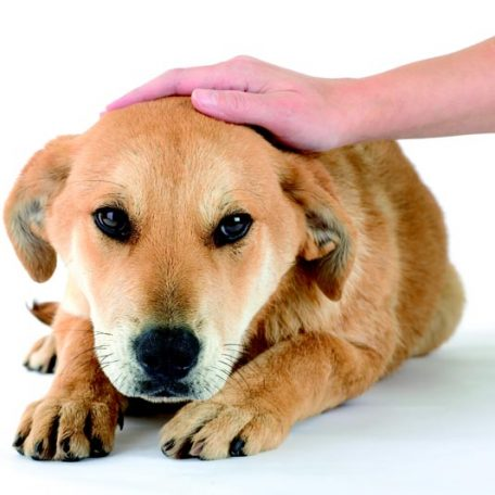 reiki healing for pets and animals